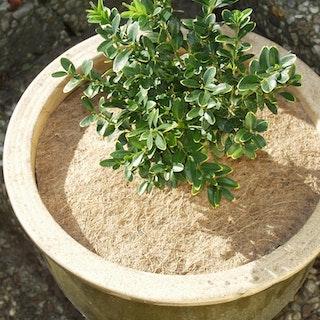 Noor Kokosscheibe Winterschutz in verschiedenen Durchmessern