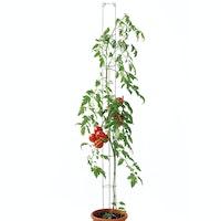bellissa Tomatensäule