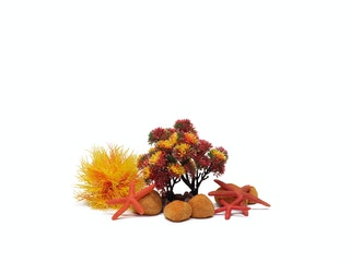 biOrb Decor Set 15L Herbst (55024)