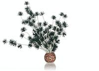 biOrb Bonsai Ball schwarz (55065)