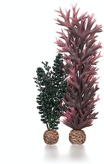 biOrb Seeperlen & Seetang dunkelgrün (55074)