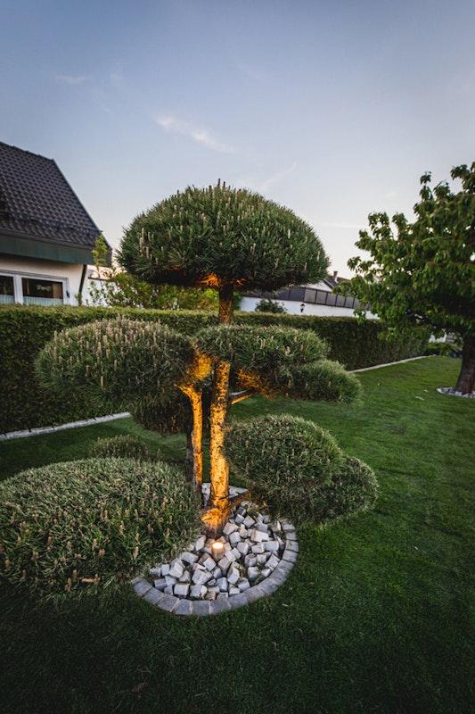 Gartenbeleuchtung: Baum mit Strahler in Szene gesetzt