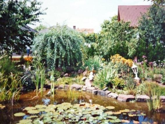 Teich mit Pflanzen