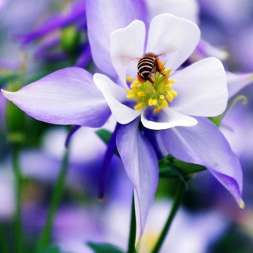 Summende Bienenparty in Ihrem Garten