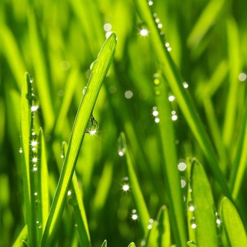 10 Tipps für den Rasen