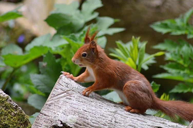Depositphotost Eichhörnchen