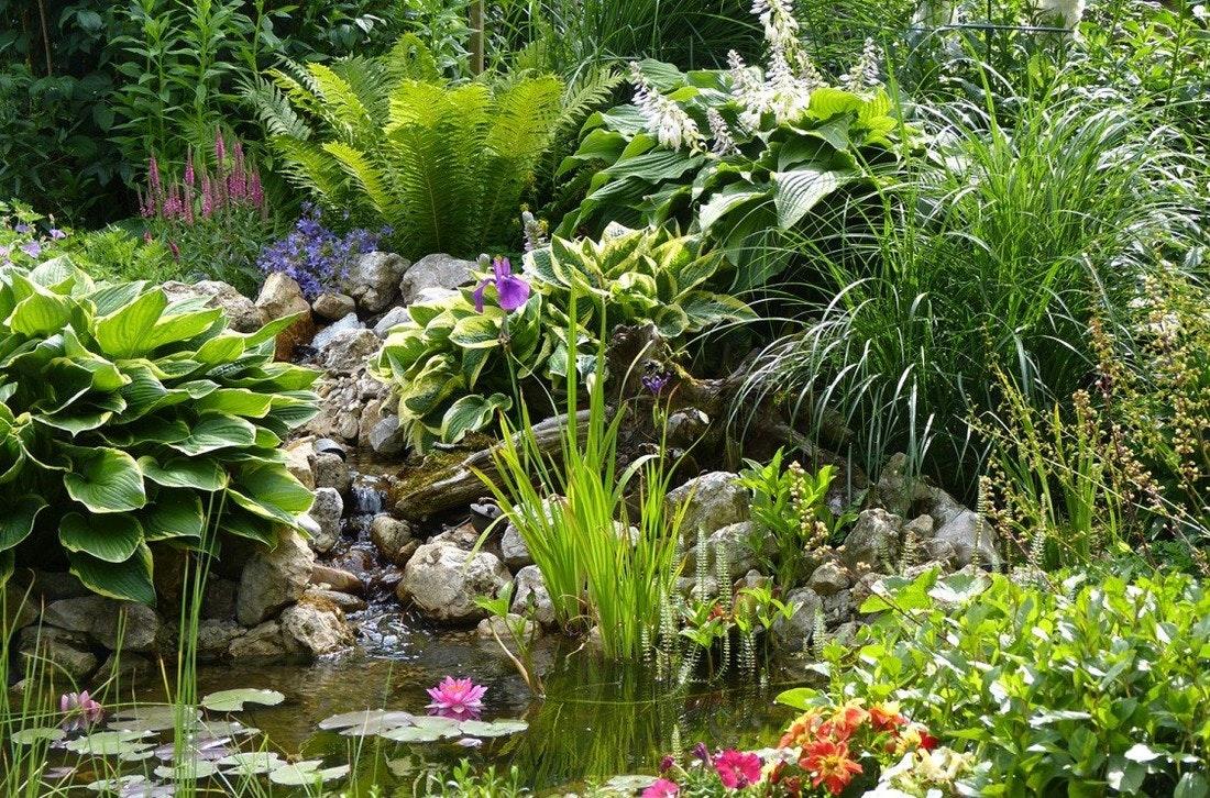 Gartenteich mit Bachlauf umgeben von sattgrünen, dichtwachsenden Gartenpflanzen.