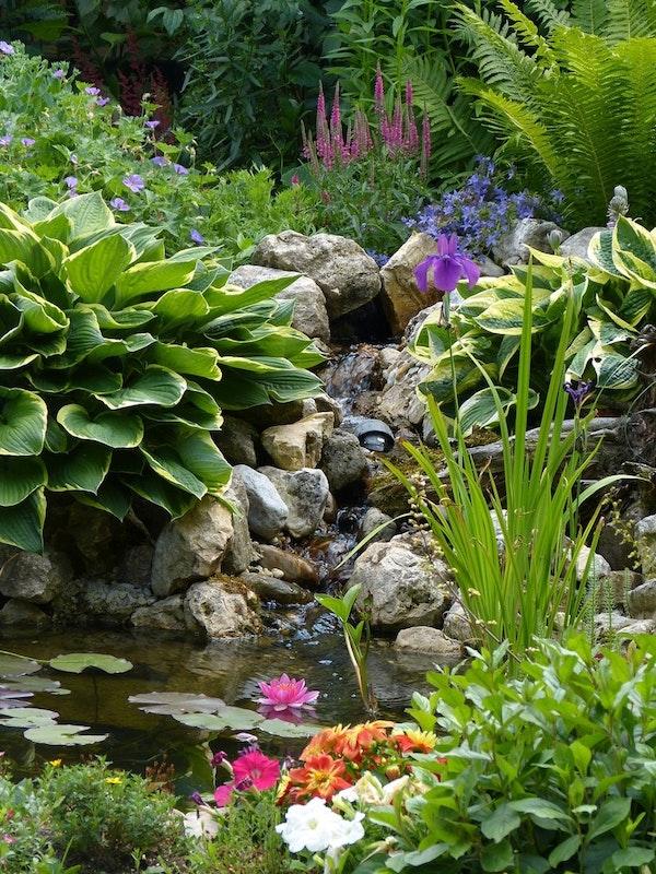 Teich mit Bachlauf und gut bewachsenem Teichrand und vielen verschiedenen Blüten