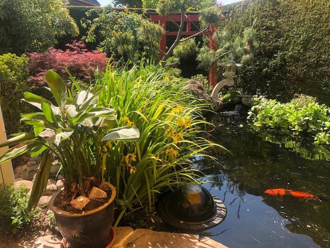 Steinterrasse mit Pflanzen und Blick auf Teich