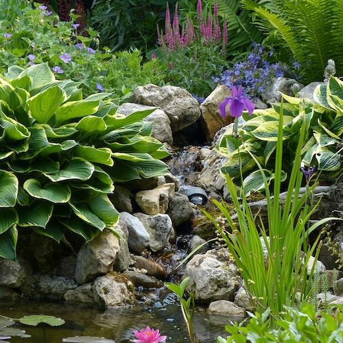 Üppig bepflanzter kleiner Teich mit Bachlauf