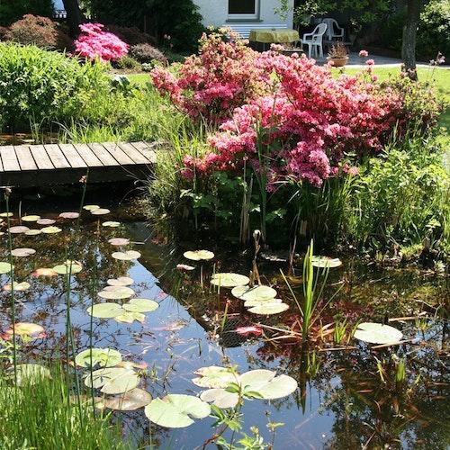 Tipps: einen naturnah gestalteten Teich sauber halten