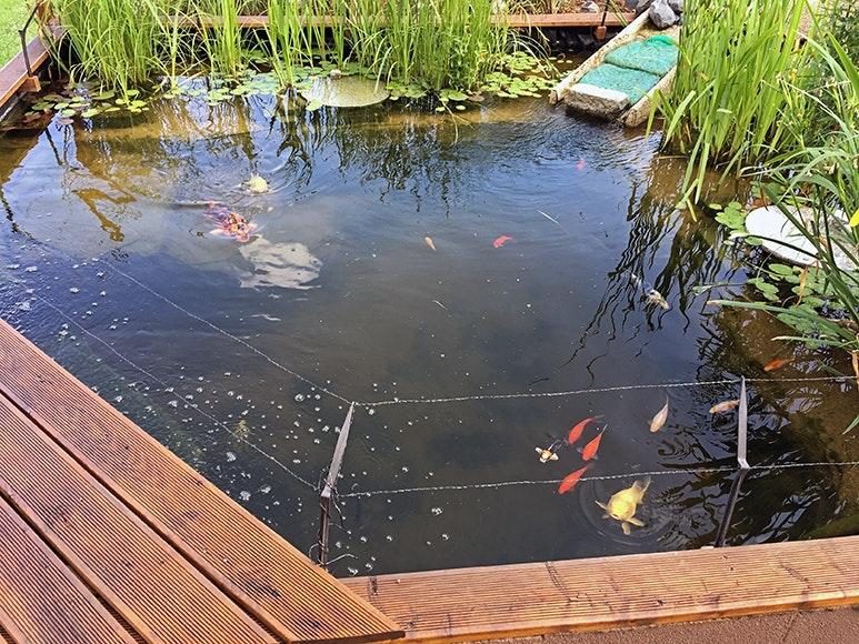 Draufsicht Teich