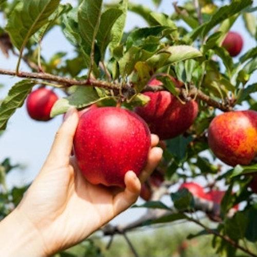 Der Herbst - Pflanzzeit für Bäume & Co.