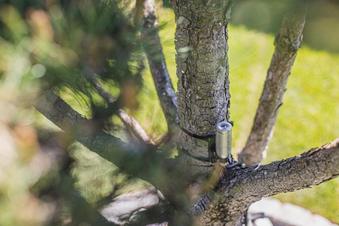 Ein kleiner Spot in einem Baum