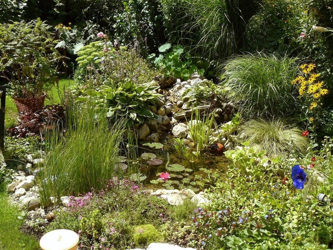 Teich mitten im Grünen: Viele Pflanzen und sattes Grün rund um den Teich.