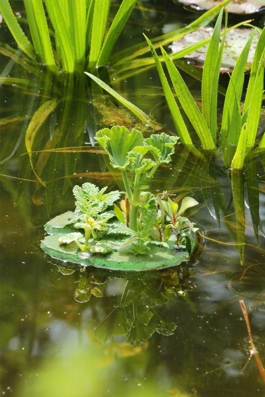 Junge Kübelpflanzen durch Styropor gesteckt wachsen zu einer prächtigen Insel heran.