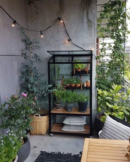 Juliana Gewächshaus Urban City Greenhouse