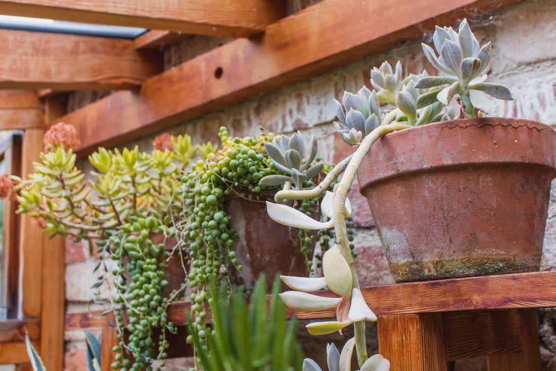 Sukkulenten wachsen nicht nur dort wo es heiß und trocken ist sondern auch bei uns
