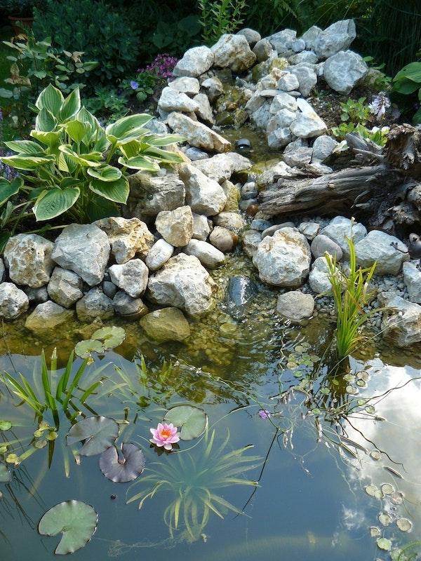 Glasklares Teichwasser Wie Geht Das Was Sollte Ich Wann Dafür Tun