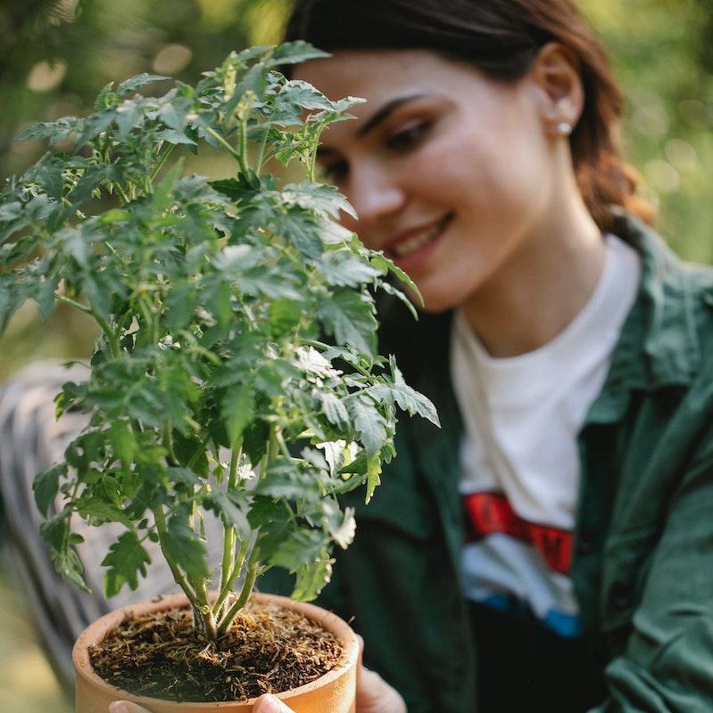 Bepflanzung des Gewächshauses
