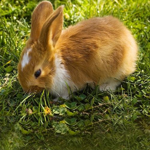 Kaninchenzaun - darauf kommt es an!