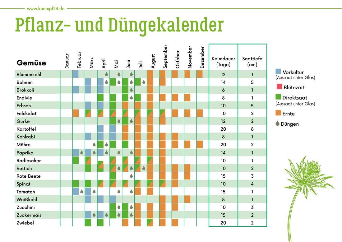Pflanz- und Düngekalender für Gemüse