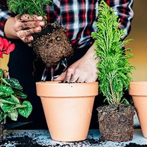 Frühjahrskur für Pflanzen – richtig Umtopfen