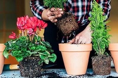 Umtopfen Pflanzen