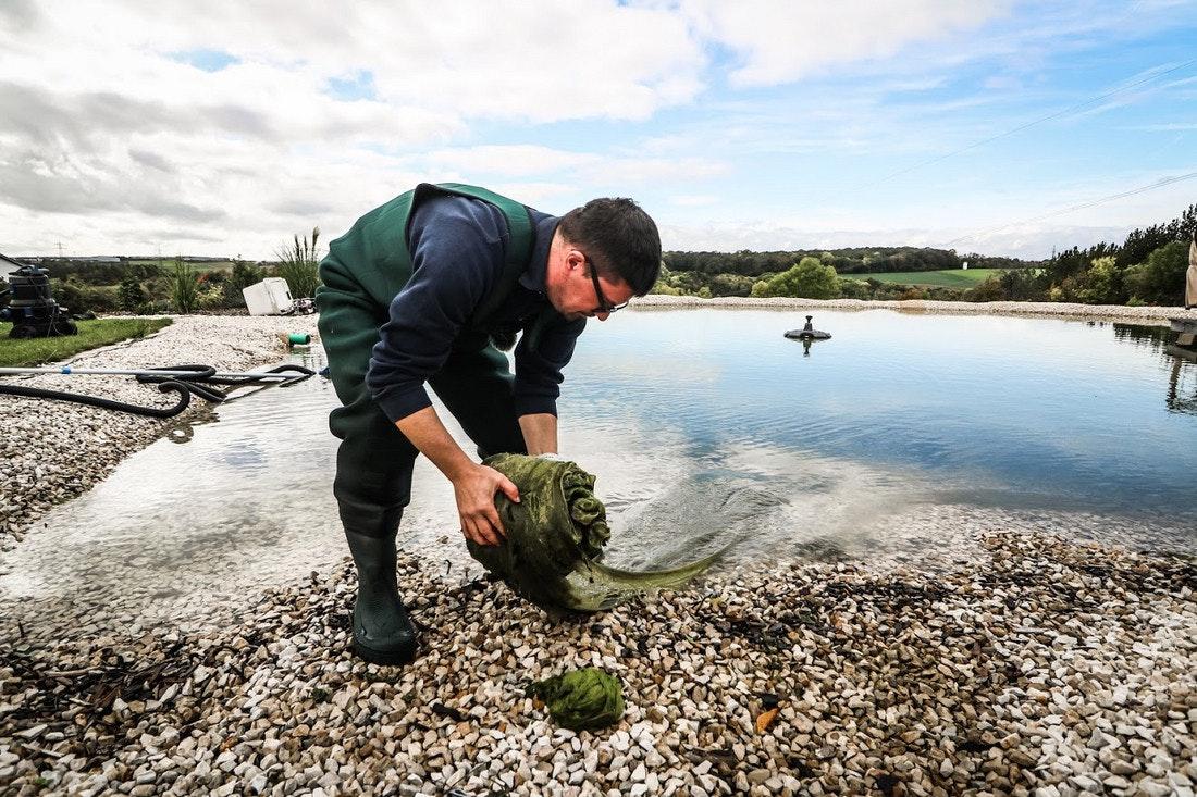 Große Algennester werden aus dem Teich entfernt
