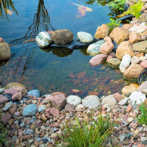 Klares Teichwasser – Wie wie bekomme ich meinen Teich sauber? Was hilft wirklich?