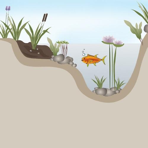 Gründe für Fadenalgen im Teich