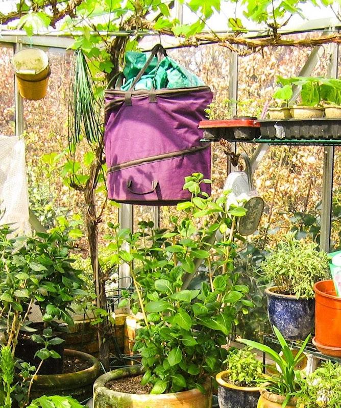 Pflanzenkübel im Gewächshaus - idealer Ort zum Überwintern