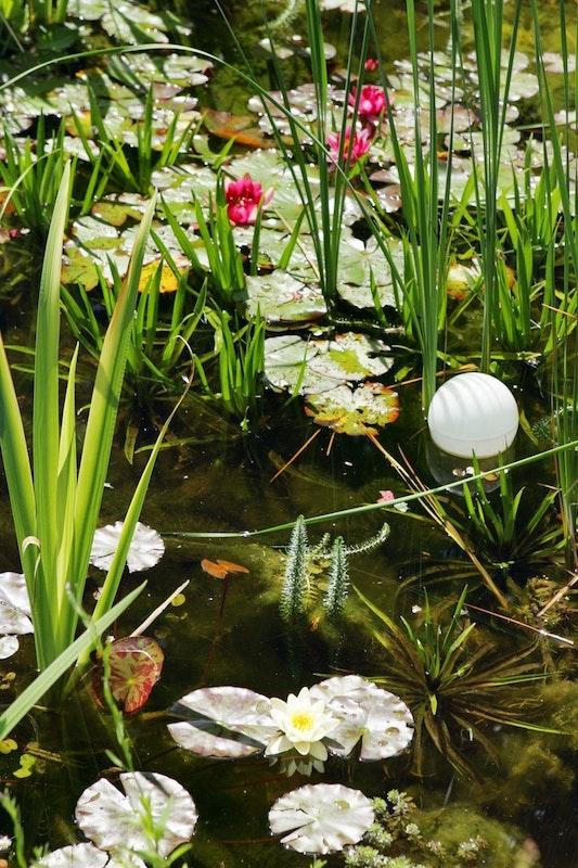 Viele Wasserpflanzen wachsen im Teich