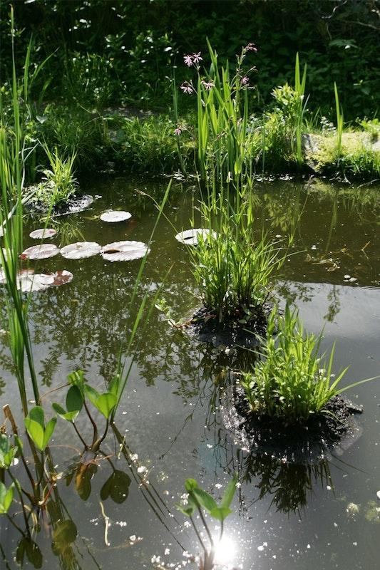 Der Gartenteich mit seinen zwei bewachsenen Inseln gleich einem natürlichen See.