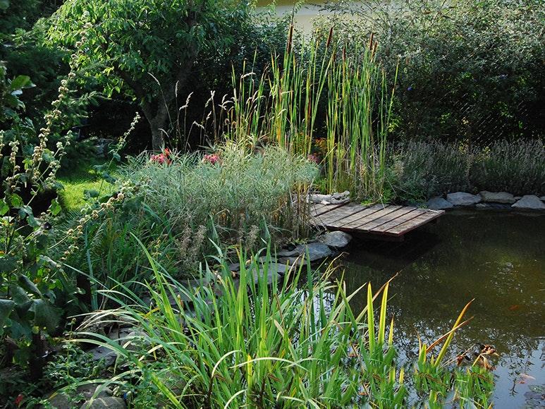 Die hohe Bepflanzung rings um den Gartenteich spendet dem Teich Schatten.