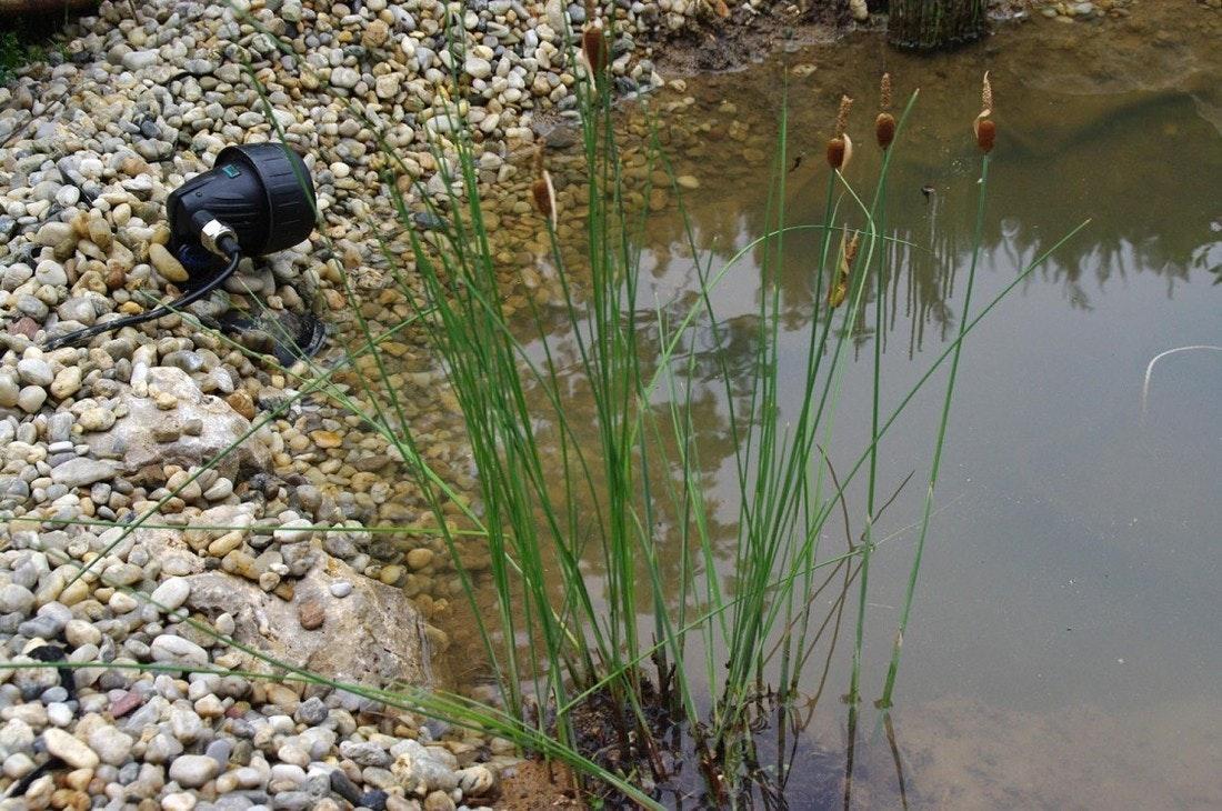 Wasserdichter Strahler am Rand des Teiches.