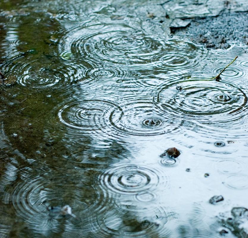 Ins Wasser tropfende Regentropfen bilden Kreise auf der Teichoberfläche