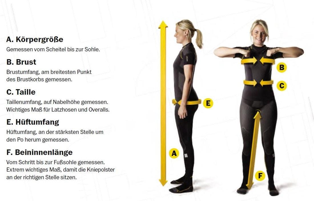 Körperbau Schaubild