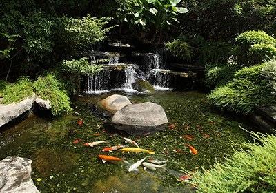 Teich mit Wasserfall und Kois