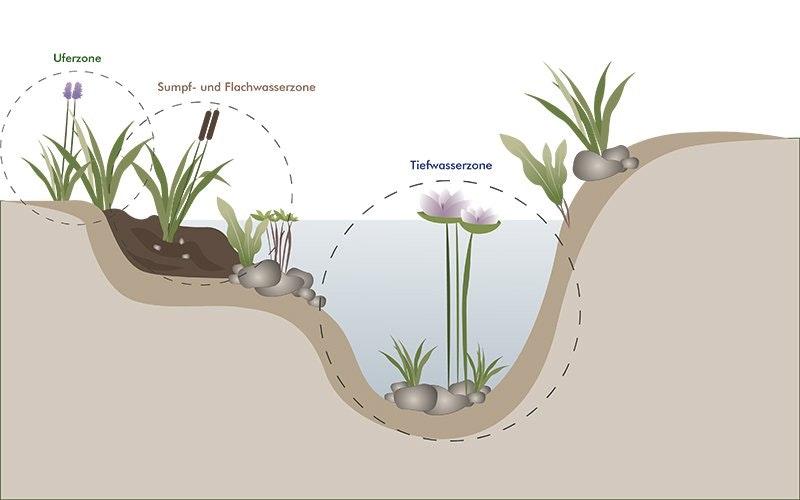 Uferzone, Sumpf- und Flachwasserzone und Tiefwasserzone im Teichquerschnitt erklärt.