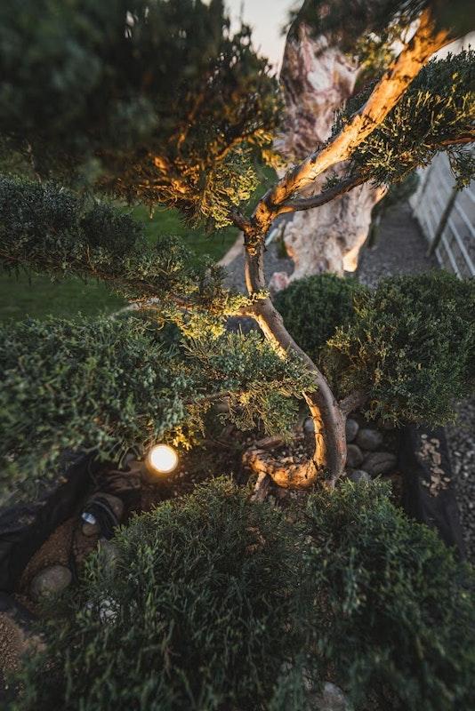 LED Spot zur Beleuchtung eines Baumes im Garten