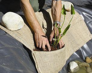 Teichbau Schritt 7: Kokosmatten werden mit Steinen beschwert und mit Teichpflanzen bepflanzt.