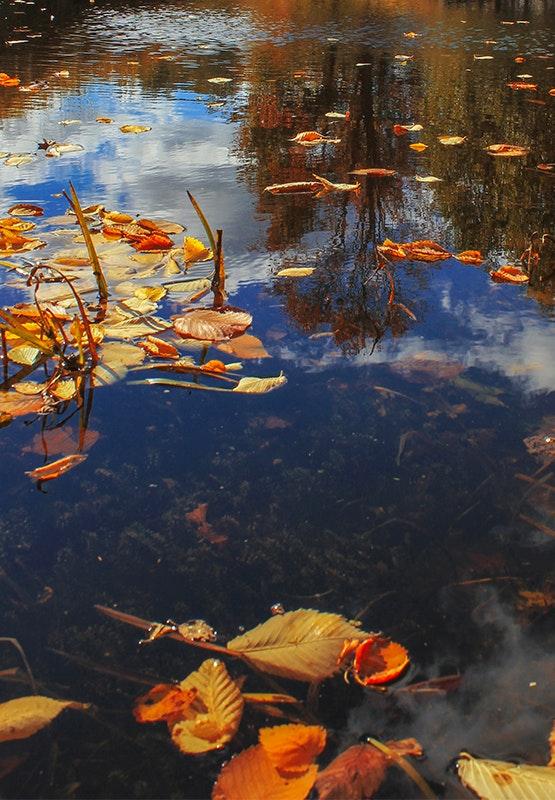 Der Teich im Herbst