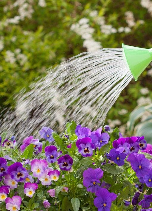 Bewässerungs-Lösungen während der Urlaubszeit