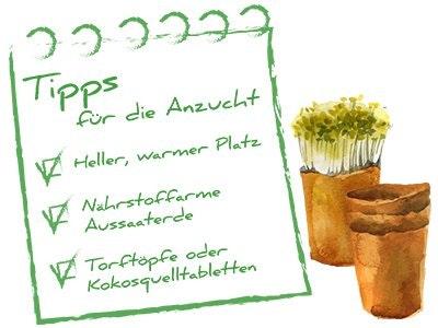Skizze Anzucht + Tipps