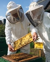 Karibu Bienenverpflichtung Imker