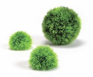 biOrb Dekogewächsball Set 3 grün (46060)