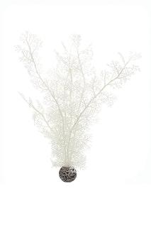 biOrb Hornkoralle groß weiß (46072)