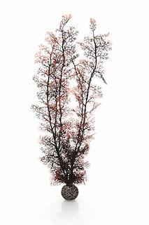 biOrb Hornkoralle extra groß dunkelrot (46075)