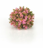 biOrb Blumenball pink (46088)
